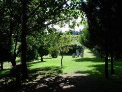 bosque-1125x844